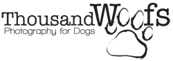 Thousand Woofs Photography for Dogs