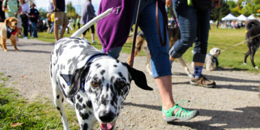 "Dogs and their owners gather for a 2.5 km charity fundraiser walk through the park during the Animal Rescue Foundation's (ARF's) 4th annual Walk N' Wag at River Park in Calgary on Sunday, Sept. 22, 2013. All funds raised during the walk went to support ARF and its ""Pad for Paws"" campaign. The event raised just over $10,000. (Photo by Courtney Blatch/The Press"
