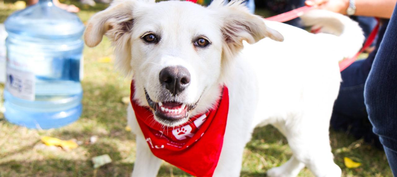 Register for our Walk n' Wag