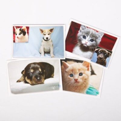 shop_notecards