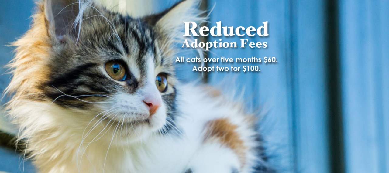 Reduced Adoption Fees