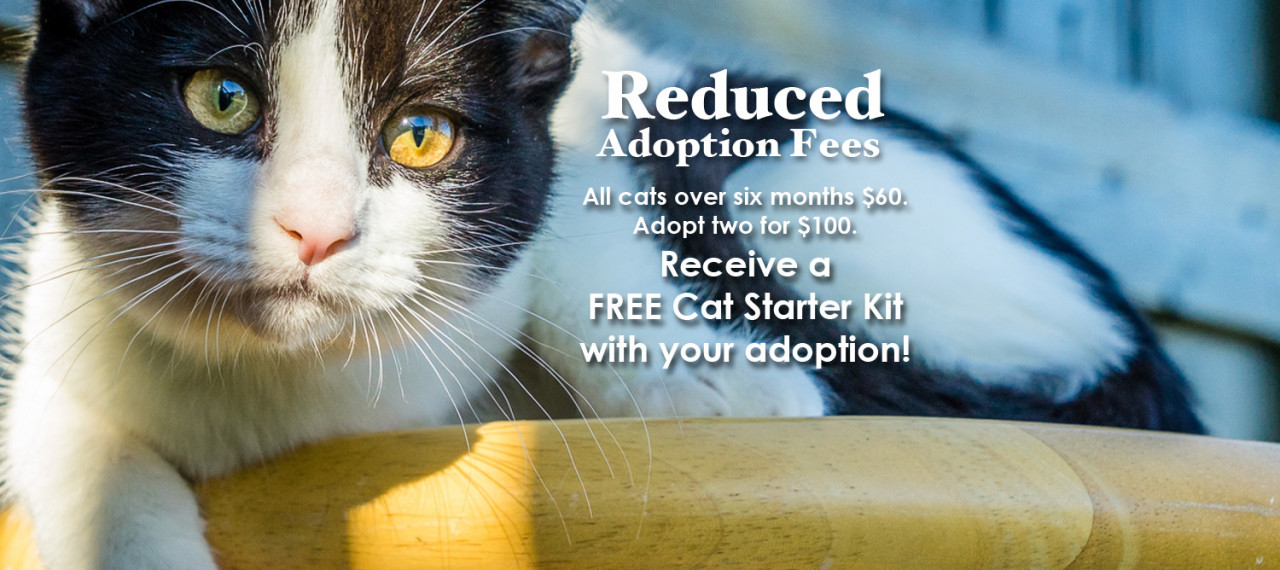 reduced_adoption_slider_2